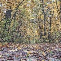 осень. :: Геннадий Свистов