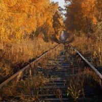 дорога в осень :: Николай Матющенко