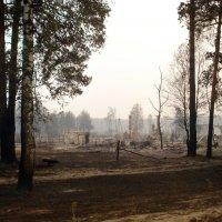 Природные пожарища Рязанщины. 4 августа 2010 г. :: Николай Варламов