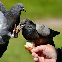 кыш отсюда! :: linnud