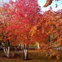 Осень.. :: Serg