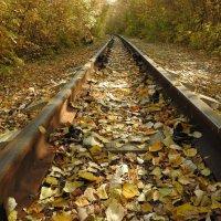 Дорога в осень :: Vit Falcone