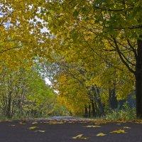 Однажды осенью....... :: Василий Аникеев