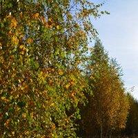 Лесной пейзаж :: Ольга