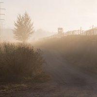 Туманная реальность... :: Sergey Apinis