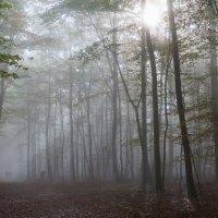 В тумане :: Sergey Kukhtichev