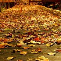 Дорога в Осень :: олег свирский