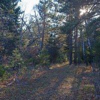 Лесной полумрак :: Анатолий Иргл