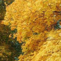 Осень :: Сергей Бухарев