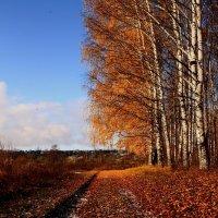 Осень в березовой роще 2 :: Татьяна Шаклеина