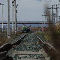 Бархатный путь! :: Дмитрий Скубаков