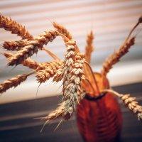 Пшеница :: Оксана