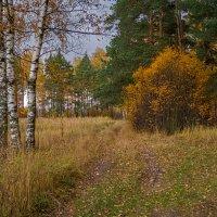 Осень в Подмосковье :: Андрей Дворников