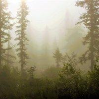 Сырой туман :: Сергей Чиняев