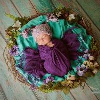 Фотосессия новорожденных :: Марина Белогрудова
