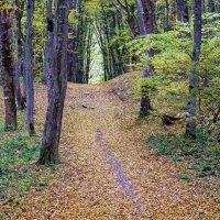 Осень :: Vladimir Lisunov