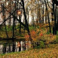 Ясная поляна.Верхний пруд. :: Инна Щелокова