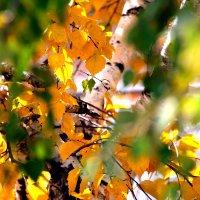 Осенние акварели... :: Валерия  Полещикова