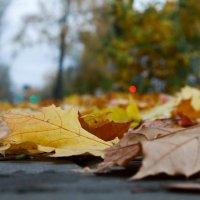 Осень здесь :: Алексей Медведев