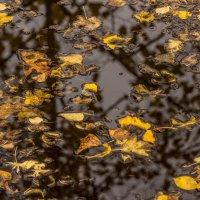 Осень в луже :: Михаил Тищенко