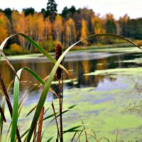 Осень на пруду. :: Михаил Столяров