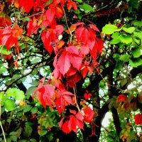 Чаровница осень :: Нина Бутко