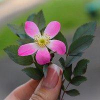 Просто цветочек) :: Gaivor ina