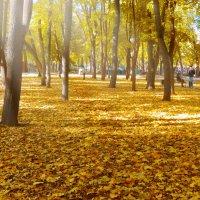Осенний свет... :: SaGa