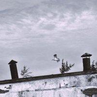 Крыша и чайка :: Алексей Хвастунов