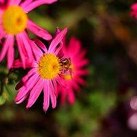 Про пчелу :: Сергей Землянский
