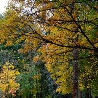 Осенний парк :: Татьяна Бронзова
