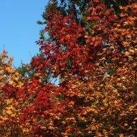 Осенние краски :: Виктор Х.