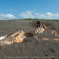 смерть в черных песках Камчатки :: Ivan Kozlov