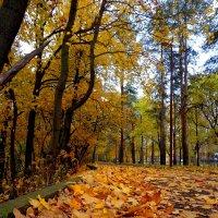шелест листвы :: Наталья Сазонова