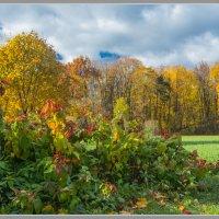 Осень :: Владимир Белов