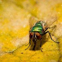 Осенняя муха :: Юрий Ричка