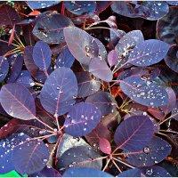 Осенние листья... :: Валерия Комова