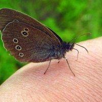 Маленькая фея присела мне на руку. :: оля san-alondra