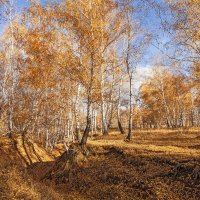 Осень золотая. :: Лилия *