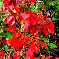 Красавица осень :: Нина Бутко