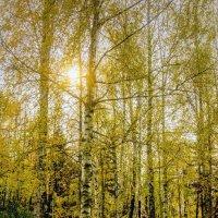 В парке. :: Виталий Бененко