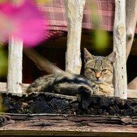 Дере венский кот... :: донченко александр