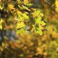 Закружила осень :: ninell nikitina
