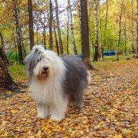 осень в лесочке :: Лариса Батурова