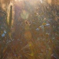 Травы :: Алина Шостик