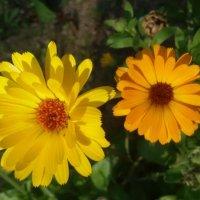 Жёлтый и оранжевый :: Дмитрий Никитин