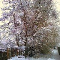 Первый снег :: Милла Корн