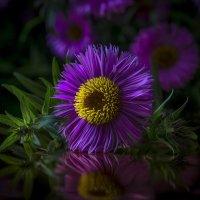 Фиолетовый цветок :: Алексей Строганов