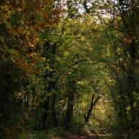 Дорога на осень :: Валерий Дворников