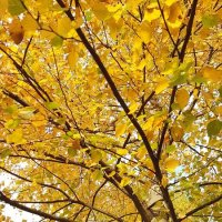 Еще не все опали листья... :: Tatjana